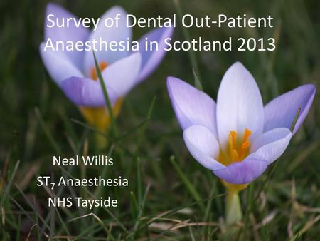 Survey of Dental Out-Patient Anaesthesia in Scotland 2013 Neal Willis ST 7 Anaesthesia NHS Tayside.