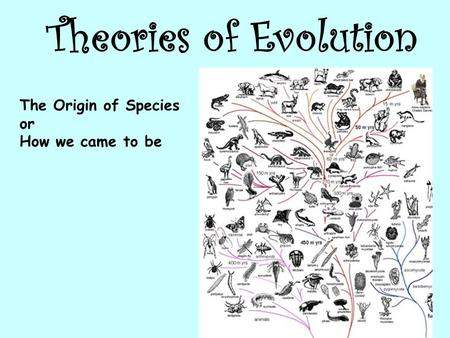 Theories of Evolution The Origin of Species or How we came to be.