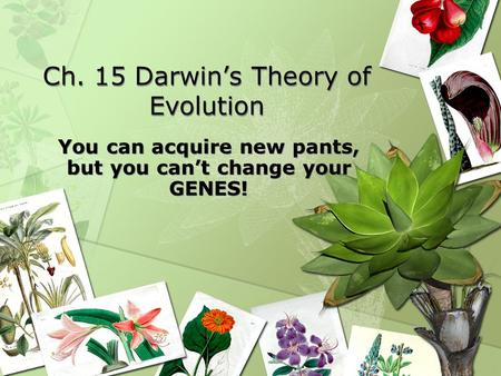 Ch. 15 Darwin's Theory of Evolution You can acquire new pants, but you can't change your GENES!