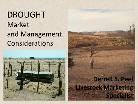 DROUGHT Market and Management Considerations Derrell S. Peel Livestock Marketing Specialist.
