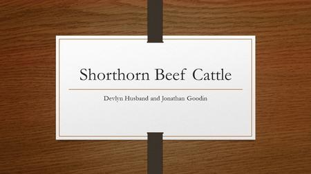 Shorthorn Beef Cattle Devlyn Husband and Jonathan Goodin.