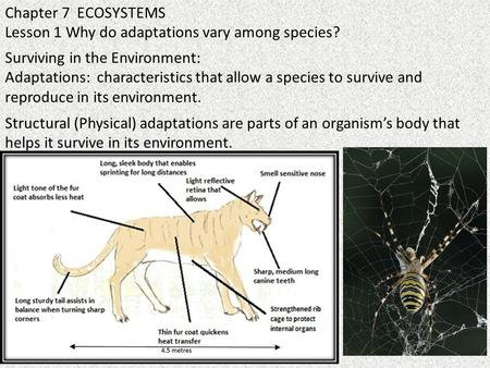 Chapter 7 ECOSYSTEMS Lesson 1 Why do adaptations vary among species? Surviving in the Environment: Adaptations: characteristics that allow a species to.