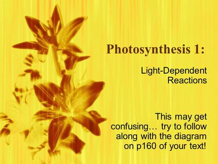 Photosynthesis 1: Light-Dependent Reactions This may get confusing… try to follow along with the diagram on p160 of your text! Light-Dependent Reactions.