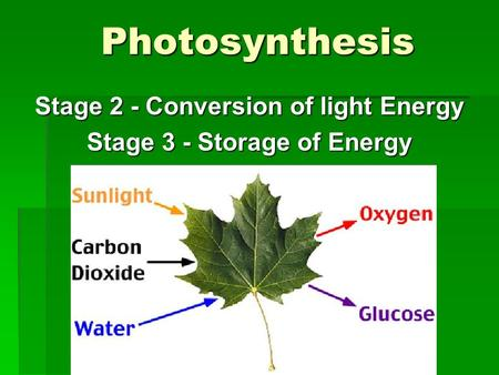 Photosynthesis Stage 2 - Conversion of light Energy Stage 3 - Storage of Energy.