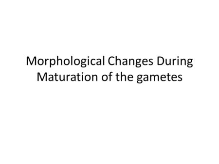 Morphological Changes During Maturation of the gametes.