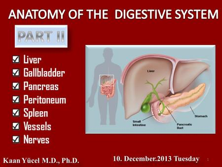 Liver Gallbladder Pancreas Peritoneum Spleen Vessels Nerves Kaan Yücel M.D., Ph.D. 10. December.2013 Tuesday 1.