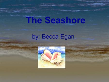 The Seashore by: Becca Egan. The World's Shores Two thirds of water is covering the worlds surface. The seashore is made up of a mixture of crushed rocks,
