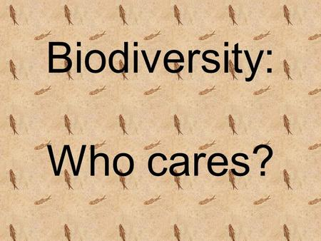 Biodiversity: Who cares?. Which do you like better? A B.