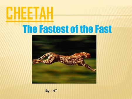 The Fastest of the Fast By: HT. Do you like cheetahs? If you do you should check out this awesome power point.