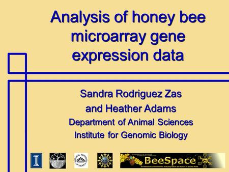Analysis of honey bee microarray gene expression data Sandra Rodriguez Zas and Heather Adams Department of Animal Sciences Institute for Genomic Biology.