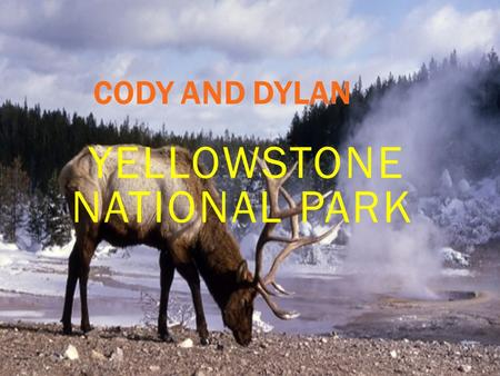 CODY AND DYLAN YELLOWSTONE NATIONAL PARK YELLOWSTONE HISTORY In 1872 the park was open to the public In 1883 hunting was only permitted to predators.