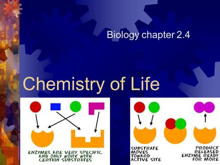 Chemistry of Life Biology chapter 2.4. Enzymes (Proteins)  Enzymes are proteins that act as catalysts in nearly all metabolic processes (essential for.