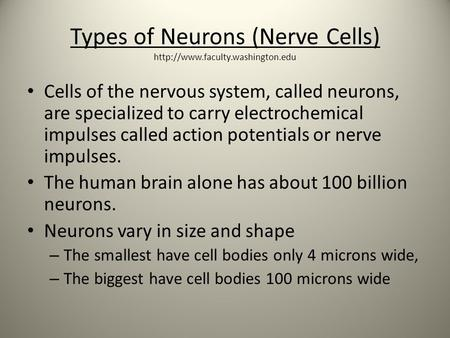 Types of Neurons (Nerve Cells)  Cells of the nervous system, called neurons, are specialized to carry electrochemical.