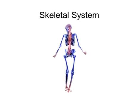 Skeletal System. Abb's & word part review Skeletal Vocab: for the words below in the square do # 1 & 2 1. 2. using the word parts chart, try to define.