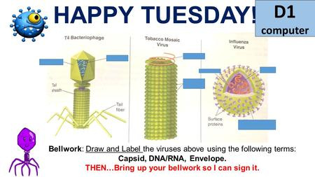 HAPPY TUESDAY! Bellwork: Draw and Label the viruses above using the following terms: Capsid, DNA/RNA, Envelope. THEN…Bring up your bellwork so I can sign.