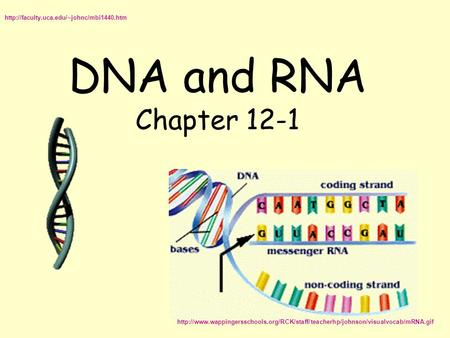 DNA and RNA Chapter 12-1
