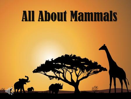 All About Mammals What is a mammal? A mammal is an animal that has hair or fur. What mammal does this fur belong to? Most mammals give birth to live.