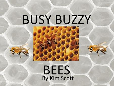 BUSY BUZZY BEES By Kim Scott. A sample bee hive. There are approximately 3000 bees in here!