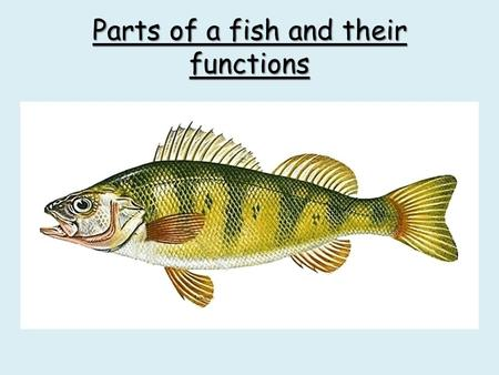 Parts of a fish and their functions