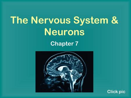 The Nervous System & Neurons Chapter 7 Click pic.