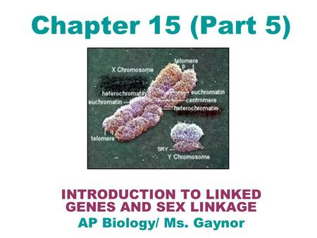Chapter 15 (Part 5) INTRODUCTION TO LINKED GENES AND SEX LINKAGE AP Biology/ Ms. Gaynor.