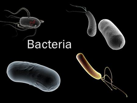 Microorganisms  Microorganisms (microbe) are very small organisms which are usually only visible through a microscope.  Some microbes are unicellular.