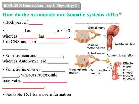 BIOL 2010 Human Anatomy & Physiology I How do the Autonomic and Somatic systems differ? Both part of ______ ________ has __________ in CNS, whereas ________.