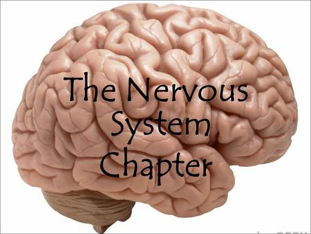 The Nervous System Chapter. Learning Targets By end of this lesson, you should be able to: Differentiate between the central and peripheral nervous systems.