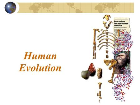 Human Evolution. What makes us human? Anthropology has examined evidence from millions of years to develop a theory of the ____________________________.