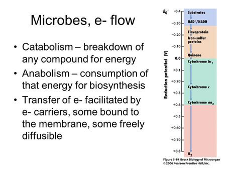 Microbes, e- flow Catabolism – breakdown of any compound for energy Anabolism – consumption of that energy for biosynthesis Transfer of e- facilitated.