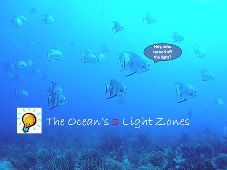 The Ocean's 3 Light Zones Hey, who turned off the light?