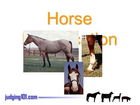 Horse Identification. Common Horse Colors Bay Bay Roan.