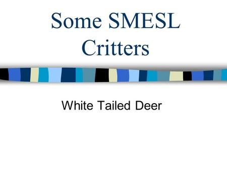 Some SMESL Critters White Tailed Deer. What type of deer are on the SMESL? White tailed deer Two type of deer in Kansas –White tailed deer –Mule deer.
