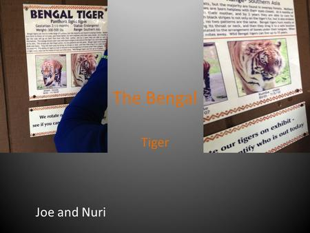 The Bengal Tiger Joe and Nuri. Common and Scientific Name Bengal Tiger Panthera tigris tigris.