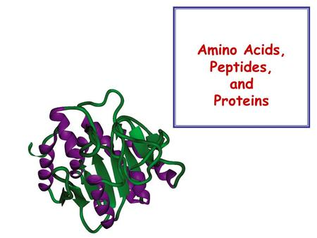 Amino Acids, Peptides, and Proteins. Introduction to Amino Acids  There are about 26 amino acids, many others are also known from a variety of sources.