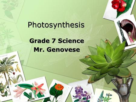 Photosynthesis Photosynthesis Grade 7 Science Mr. Genovese Grade 7 Science Mr. Genovese.