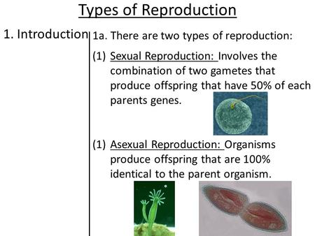 Types of Reproduction 1. Introduction 1a. There are two types of reproduction: (1)Sexual Reproduction: Involves the combination of two gametes that produce.