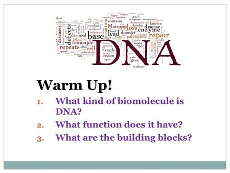 Warm Up! 1. What kind of biomolecule is DNA? 2. What function does it have? 3. What are the building blocks?
