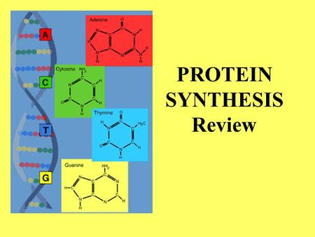 PROTEIN SYNTHESIS Review. Cell organelle where ______________ proteins are made Copying DNA _________________ G roup of 3 nucleotides _____________ in.