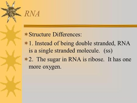 RNA  Structure Differences:  1. Instead of being double stranded, RNA is a single stranded molecule. (ss)  2. The sugar in RNA is ribose. It has one.