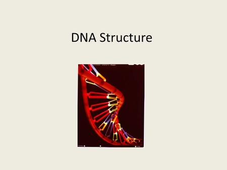 DNA Structure. Essential Questions for Today What is DNA? What is a gene? What is the basic structure of DNA? What is the function of DNA?