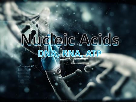 Structure Made of C, H, O, N, P What is the monomer for Nucleic Acids? Nucleotides! DNA – Double stranded (Double Helix) RNA – Single stranded.