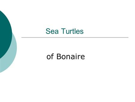 Sea Turtles of Bonaire.