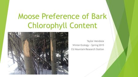 Moose Preference of Bark Chlorophyll Content Taylor Mendoza Winter Ecology – Spring 2015 CU Mountain Research Station.