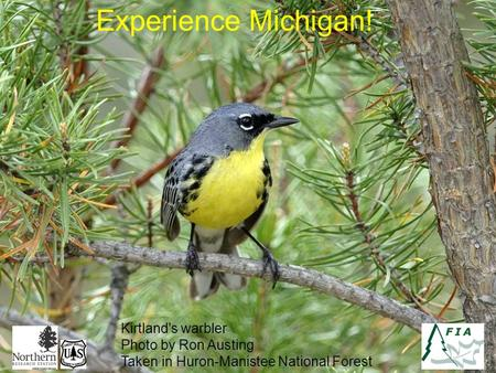 Experience Michigan! Kirtland's warbler Photo by Ron Austing Taken in Huron-Manistee National Forest.