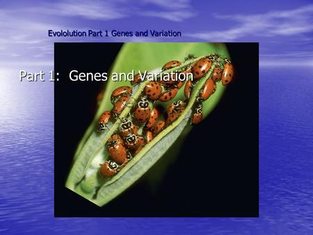 Evololution Part 1 Genes and Variation Part 1: Genes and Variation.