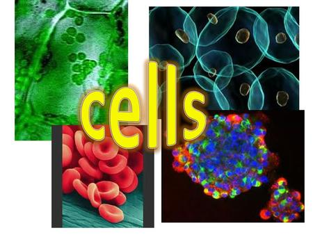 Cell Biology Introduction to cells Learning Intentions By investigating cell structure I can recognise and give the function of a variety of cell organelles.