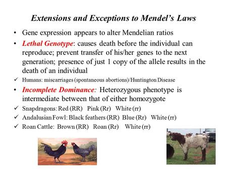 Extensions and Exceptions to Mendel's Laws Gene expression appears to alter Mendelian ratios Lethal Genotype: causes death before the individual can reproduce;