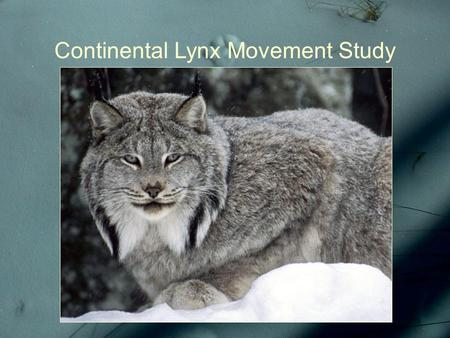 Continental Lynx Movement Study. To understand the predator...