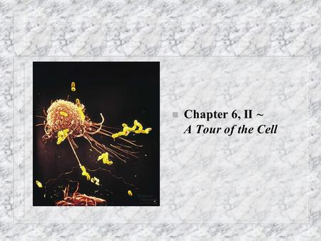 N Chapter 6, II ~ A Tour of the Cell. Other membranous organelles, I n Mitochondria – Quantity in cell correlated with metabolic activity; – Cellular.